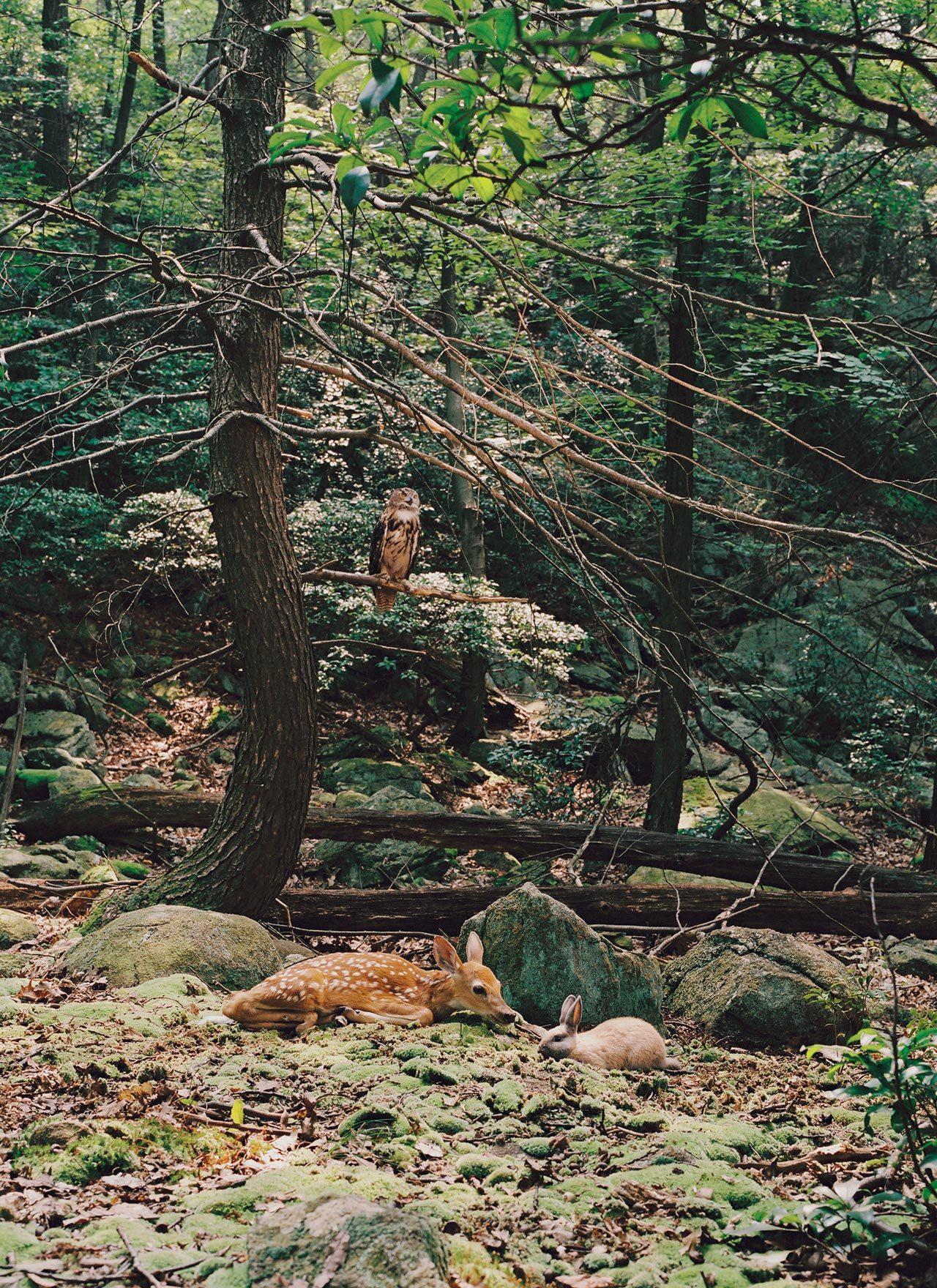 forest deer rabbit  Streamside day  Pierre Huyghe Stream 03  PCA-Stream