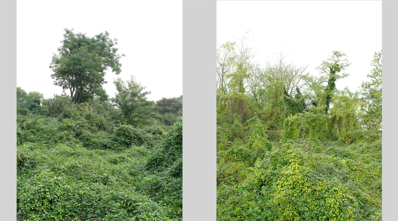 gilles clement yann monel tiers paysage nature foret corniche des forts jardinier patûre