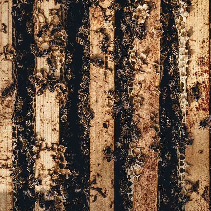 abeilles travailleuses Yann Moulier-Boutang Stream 03  PCA-Stream