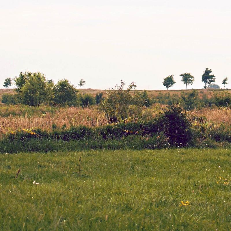 field landscape  Michel Desvigne Stream 03  PCA-Stream