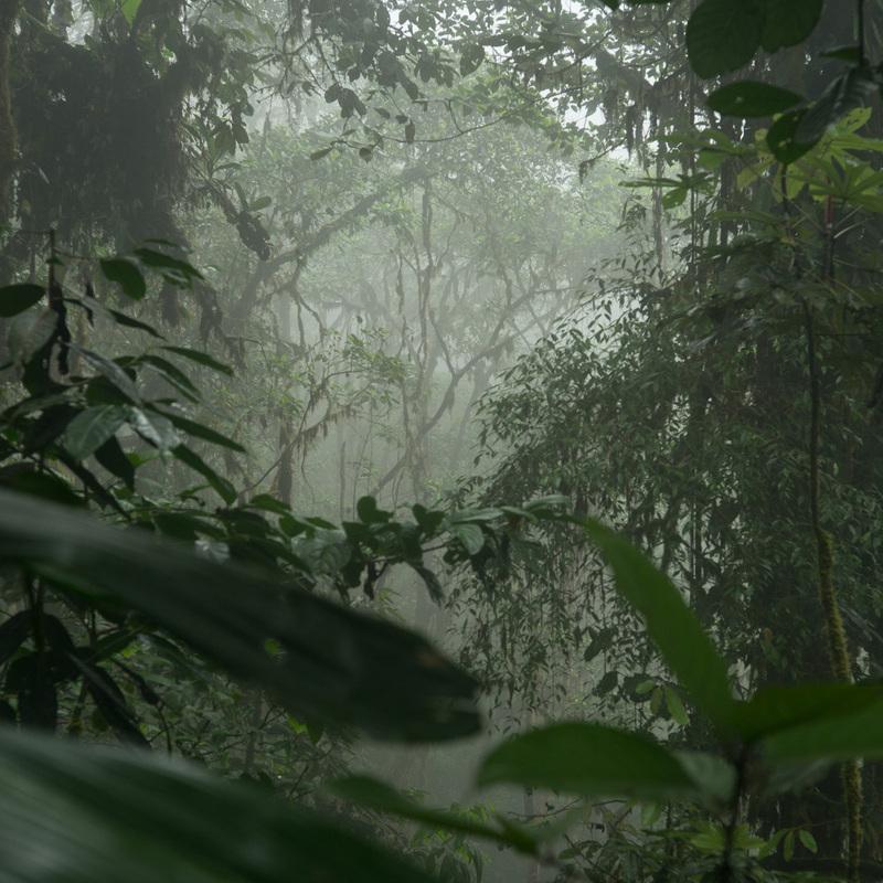 eduardo kohn forêt amazonienne comment pensent les forêts