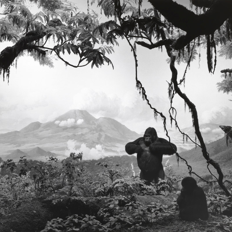 Hiroshi Sugimoto Gorilla 1994 laurent le bon diorama