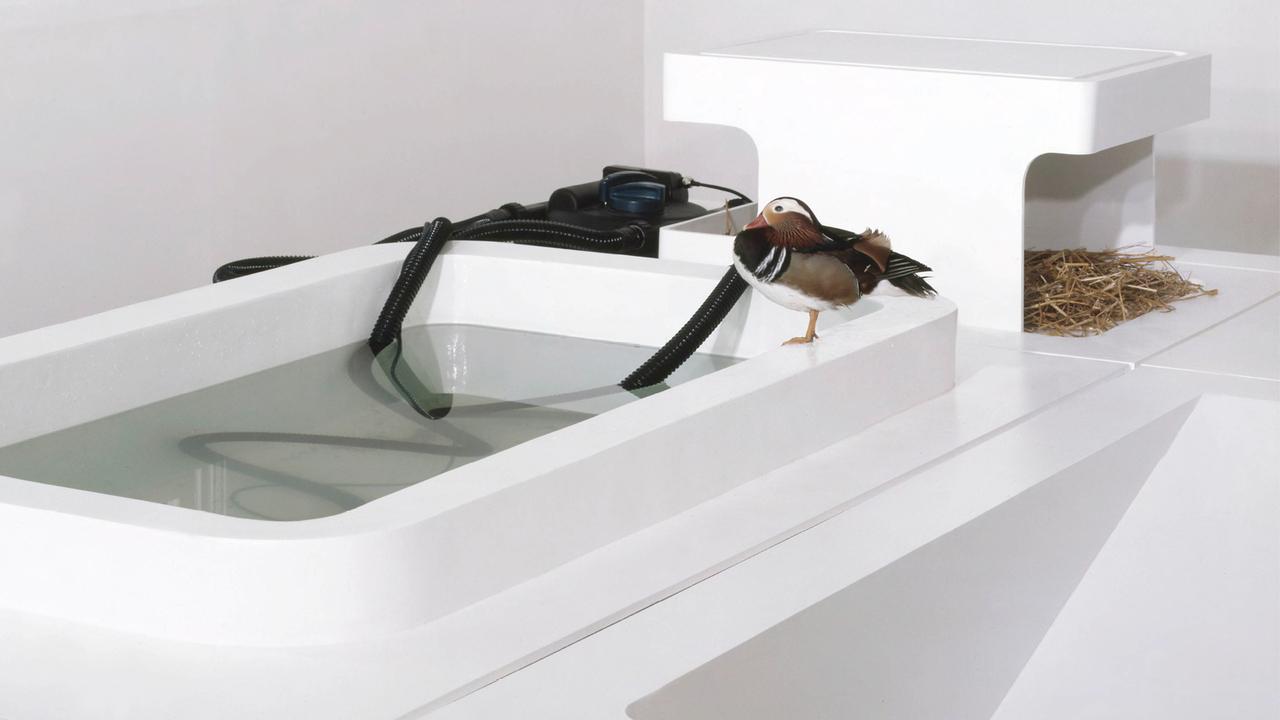 Loris Greaud eye of the duck 2005