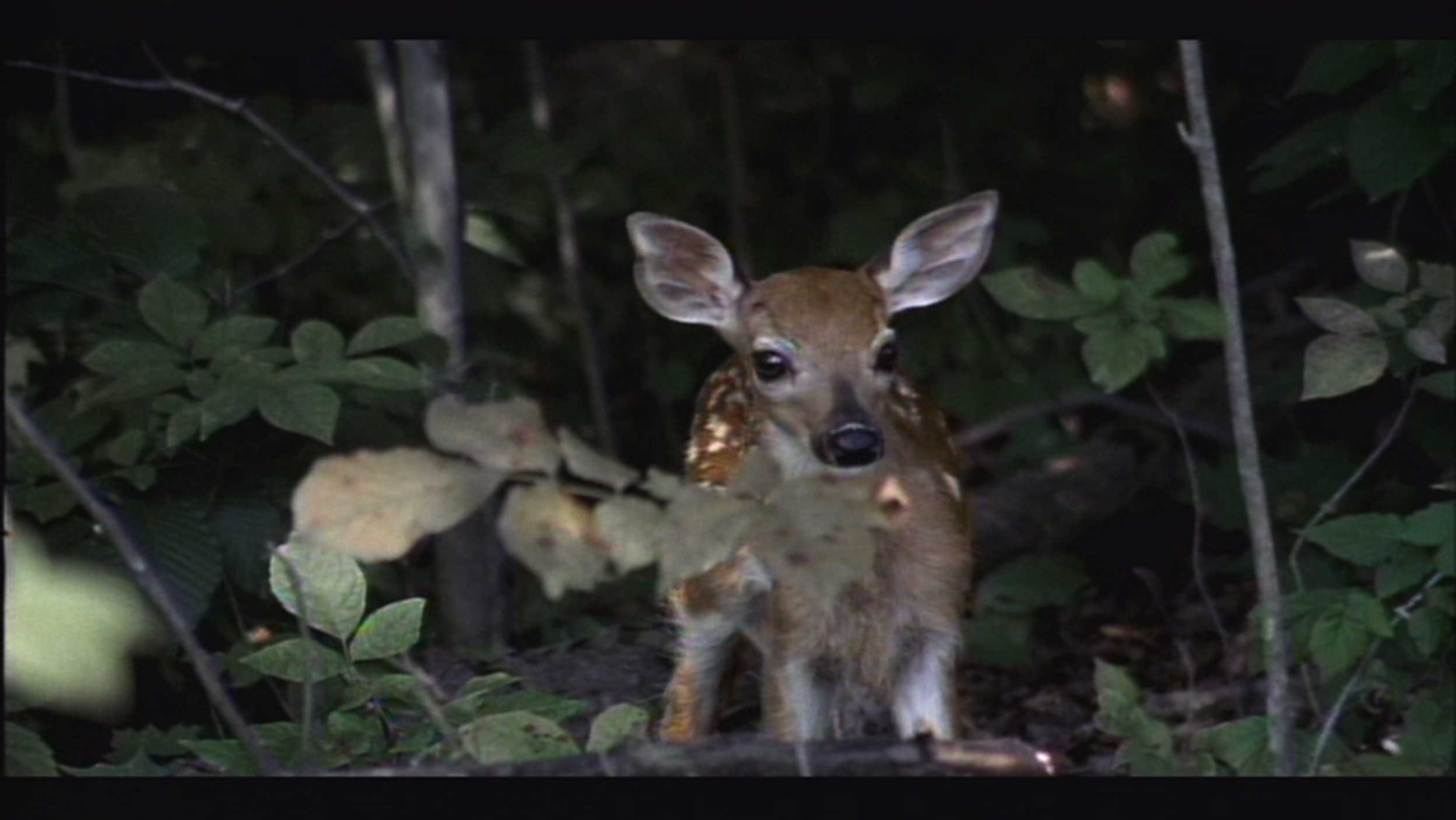 deer fawn Pierre Huyghe Stream 03  PCA-Stream