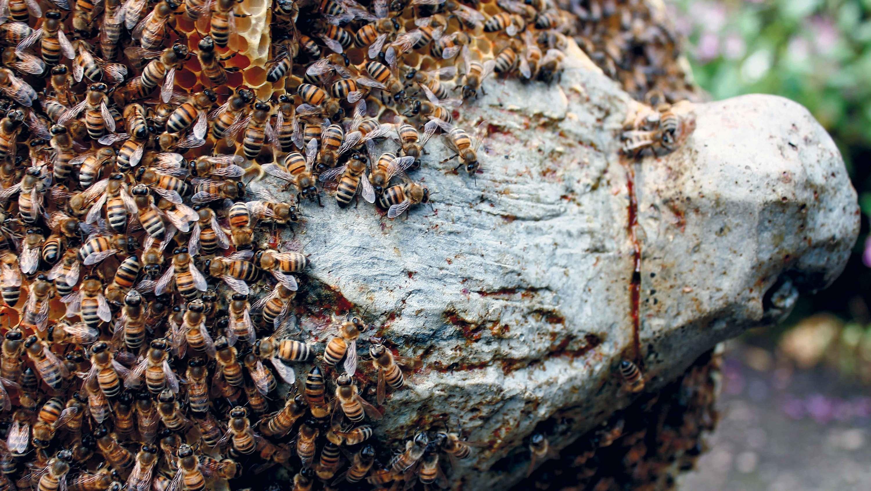 abeilles Pierre Huyghe Stream 03  PCA-Stream