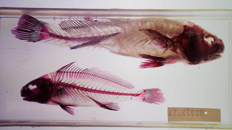 fish Camille Henrot   Kamel Mennour   Bourriaud  Stream 03  PCA-Stream