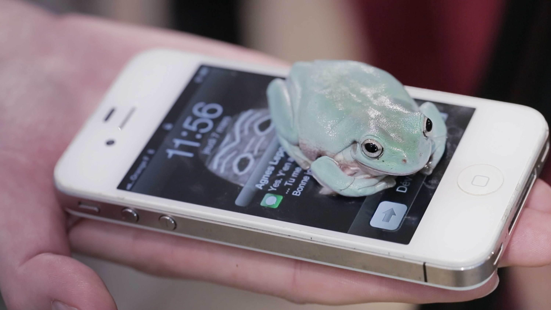 frog on phone  Camille Henrot   Kamel Mennour   Bourriaud  Stream 03  PCA-Stream