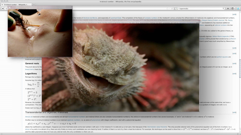 reptile  Camille Henrot   Kamel Mennour   Bourriaud  Stream 03  PCA-Stream