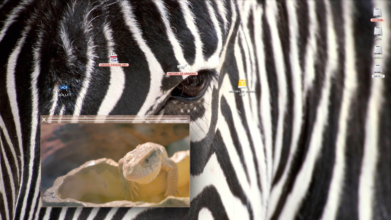 zebra Camille Henrot   Kamel Mennour   Bourriaud  Stream 03  PCA-Stream